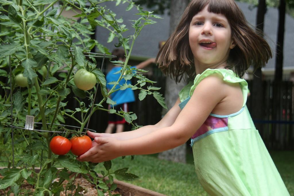 2013 - Abigail Harvesting Tomatoes
