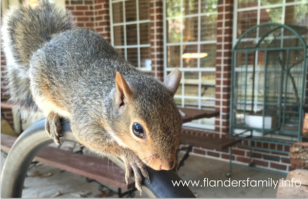Raising Baby Squirrels: a step-by-step guide
