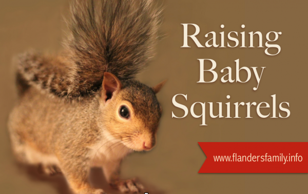 Tips for raising baby squirrels from www.flandersfamily.info