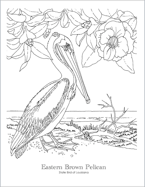 Awesome Free State Bird Coloring Pages   For All 50 States