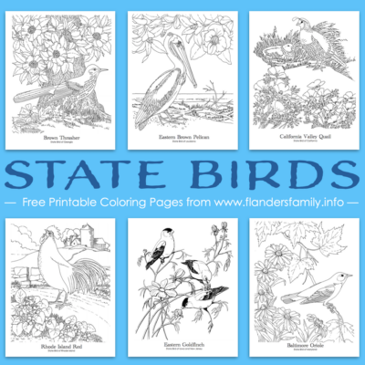 State Bird Coloring Pages (Free Printable)