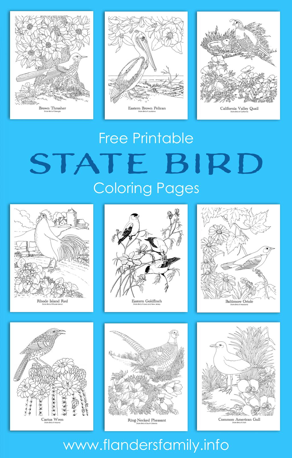 safari guide coloring pages ebook