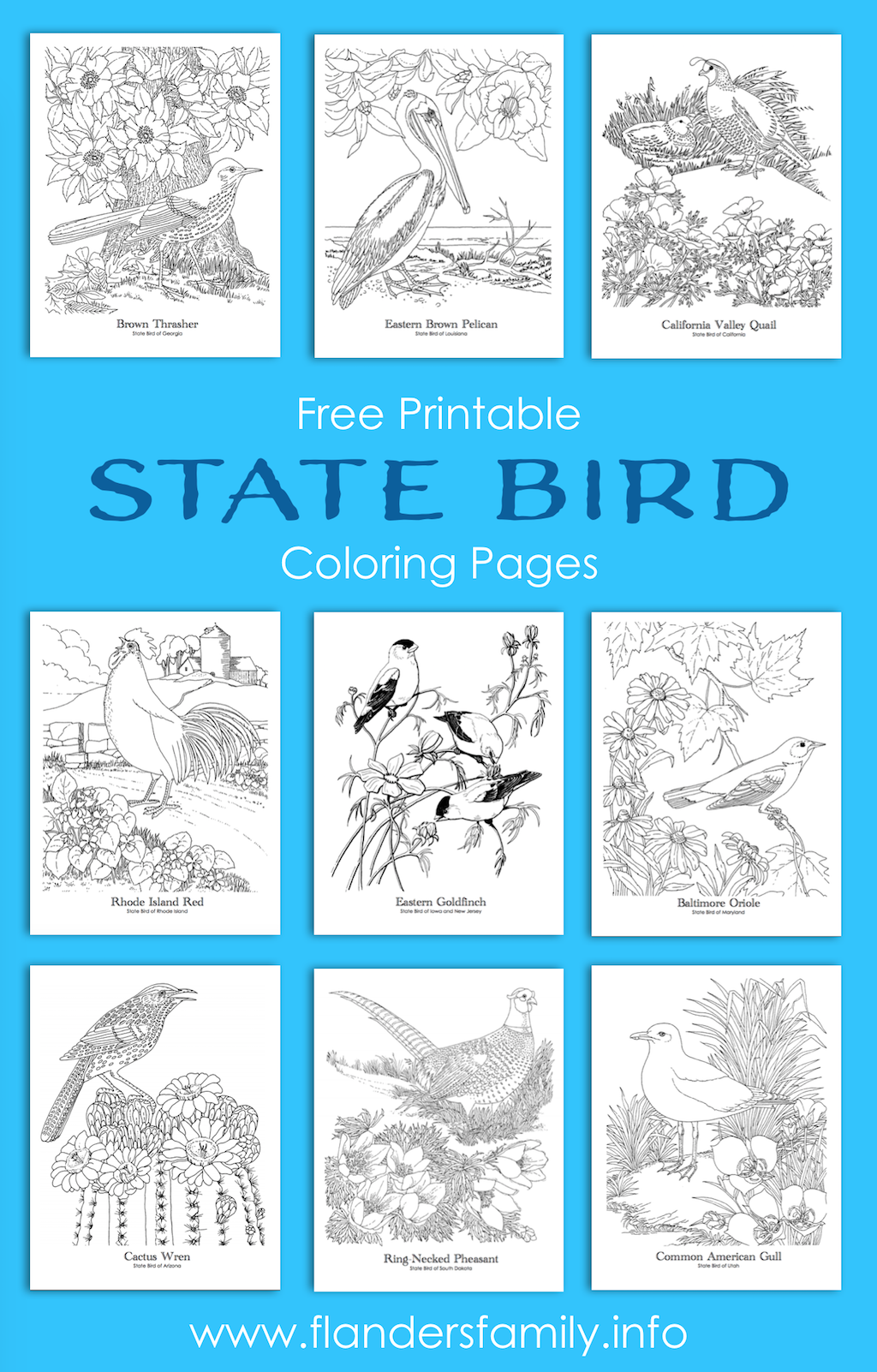 State Bird Coloring Pages - Flanders Family Homelife