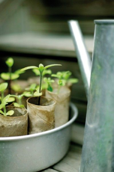 9 Nifty Uses for empty toilet paper tubes
