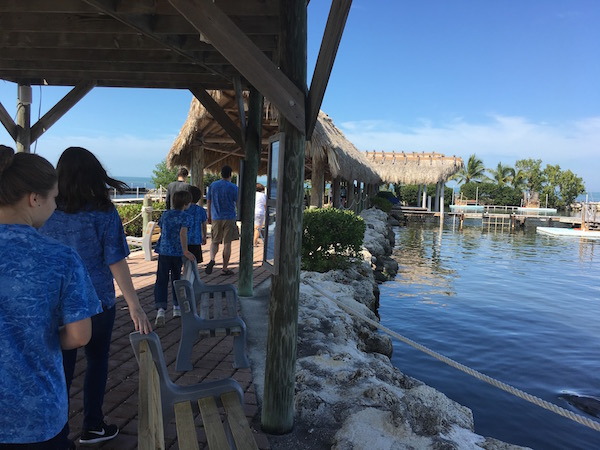 Getting up close and personal with marine mammals at Dolphin Research Center