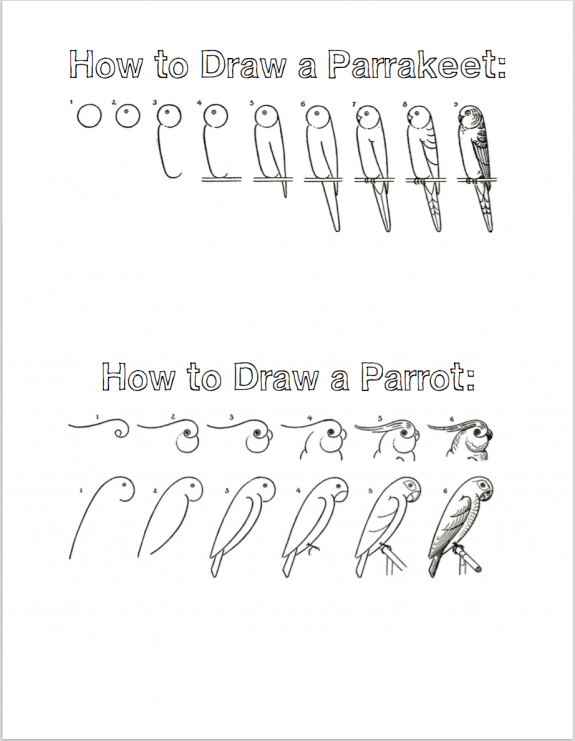 How to Draw Birds (Free Printable Tutorials)