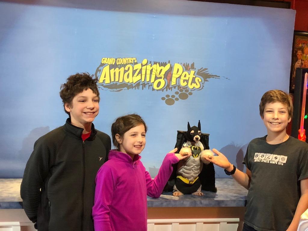 Amazing Pet Show - Fun Family Entertainment