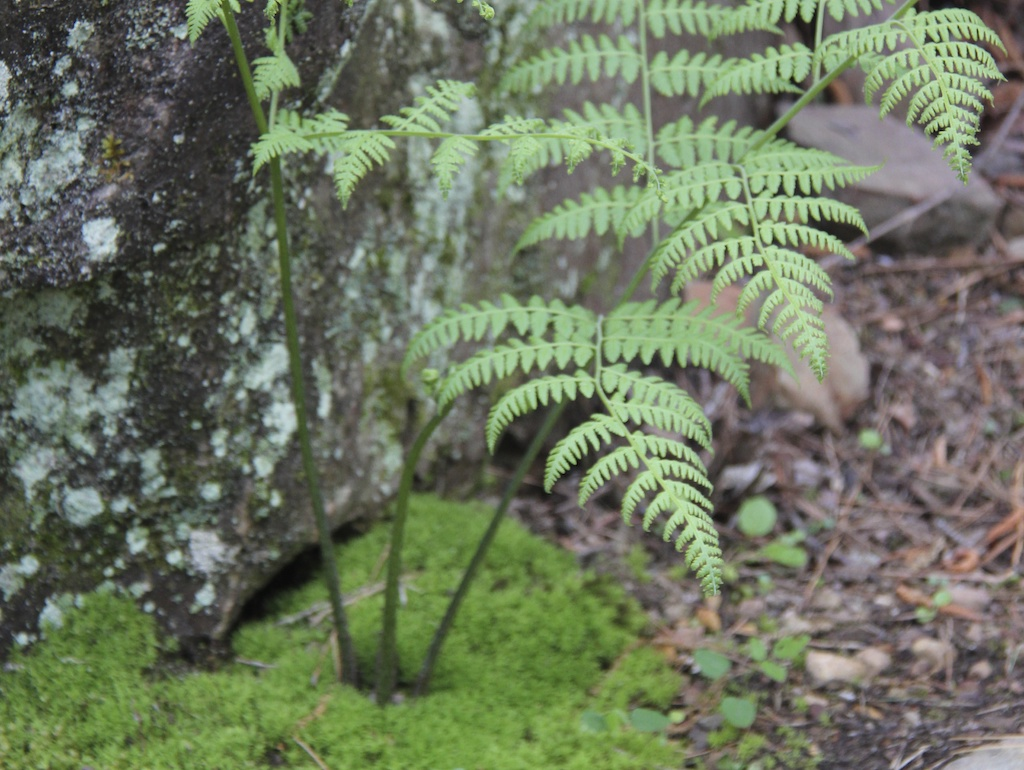 Photo Safari - Fern Fronds