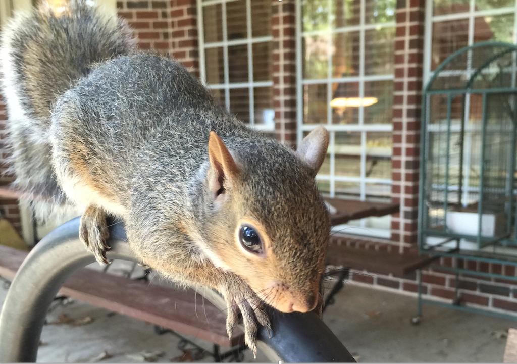 Photo Safari - Squirrel