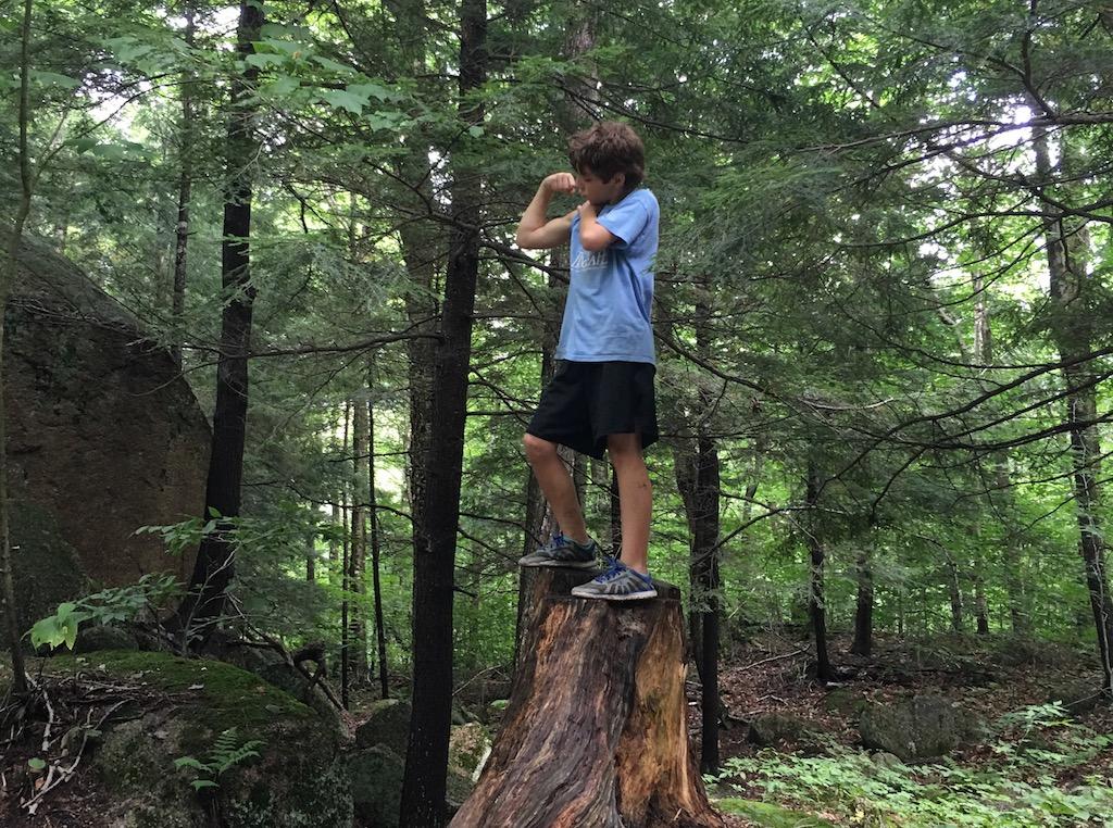 Photo Safari - Tree Stump