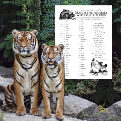 Animal Mates Matching Quiz (Free Printable)