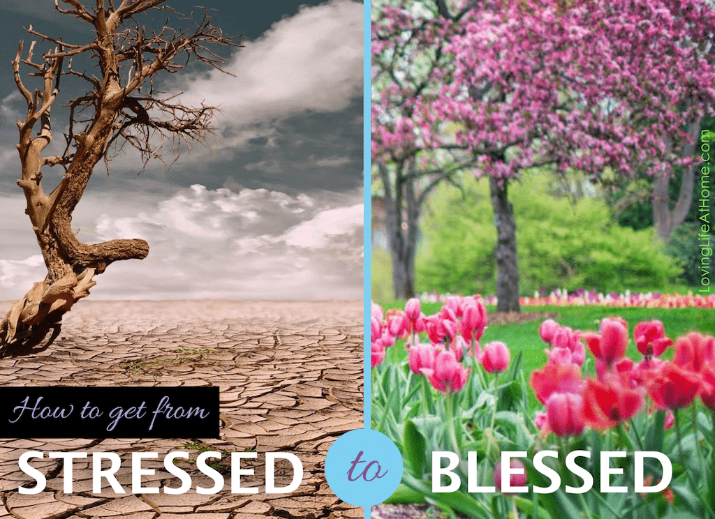 Going from Stressed to Blessed