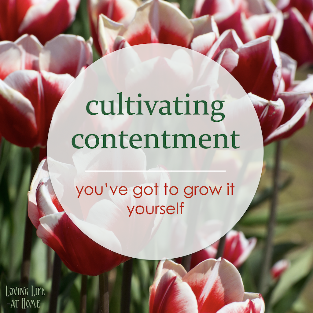 cultivate contentment on attitude day (June Holidays)