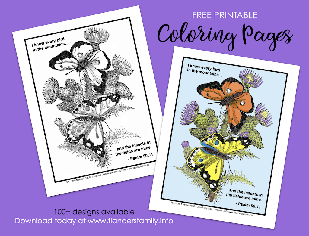 Every Bird and Insect Coloring Page